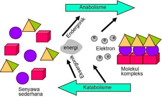 Definisi Metabolisme Dan Proses Metabolisme