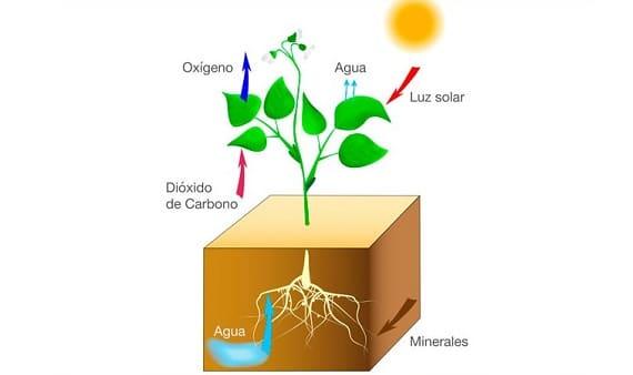Pengertian, Proses & Reaksi Fotosintesis Pada Tumbuhan